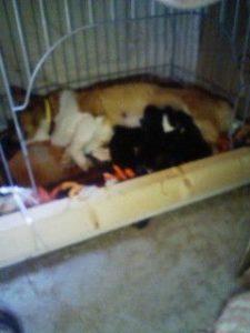 ココに仔犬誕生